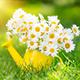 Tavaszi ajánlatok