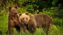 Medve les Székelyföldön Hotel Küküllő